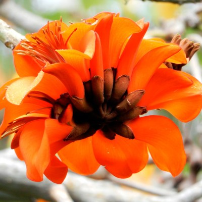 Mandalas em Flores 13