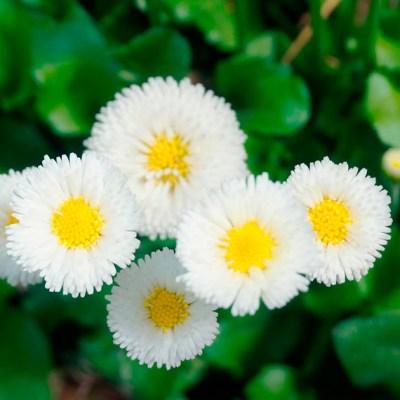 Mandalas em Flores 03
