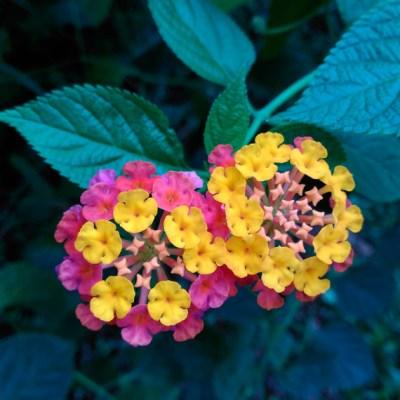 Mandalas em Flores 04
