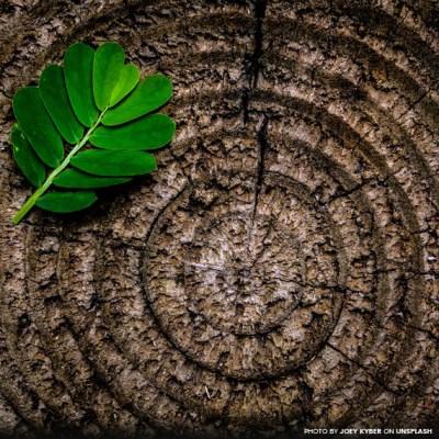 Mandalas da Natureza 13