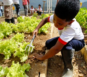 100 días de Agricultura Urbana en Venezuela