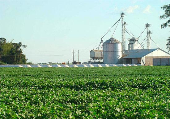El negocio de la soja en Paraguay