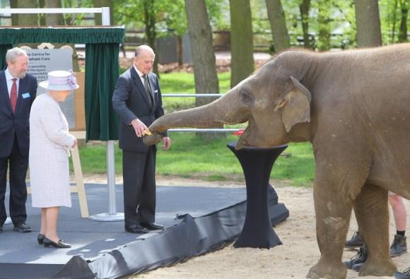 La regina Elizabeth ha incontrato lElizabeth  Elefante ed era un totale raduno sveglio