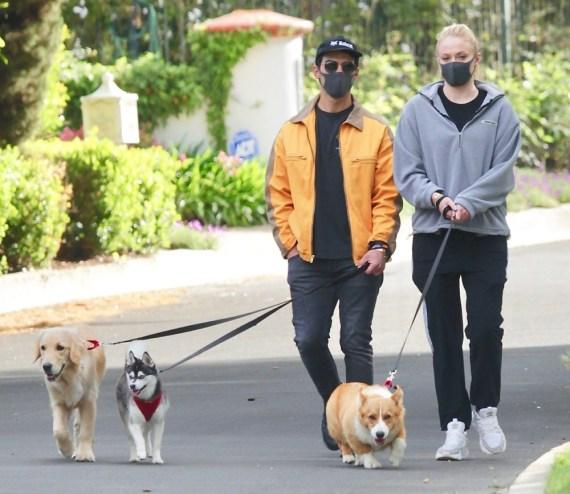 Joe Jonas esce con la incinta Sophie Turner per portare a spasso i cani