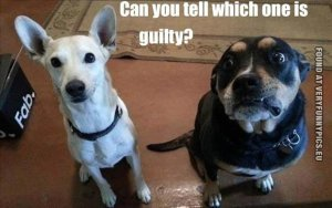 funny-picture-guilty-dog