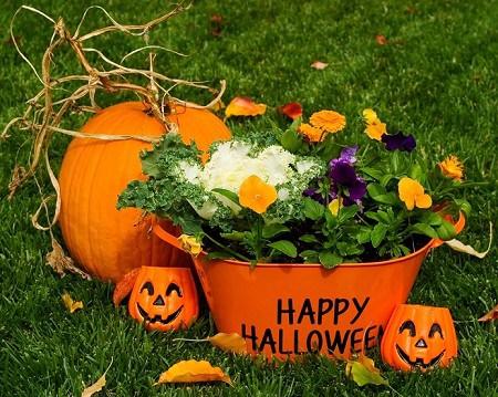 Halloween Planters - Outdoor Halloween Decorations