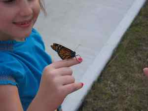 Hatched Butterflies 007