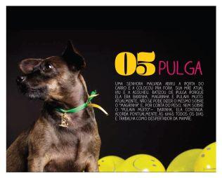 Pulga-Maio2014-1
