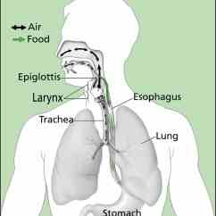 Swallowing Food Diagram Hydrologic Water Cycle Sarah Silverman Survives Life Threatening Infection