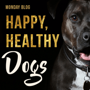 happy_healthy_dogs