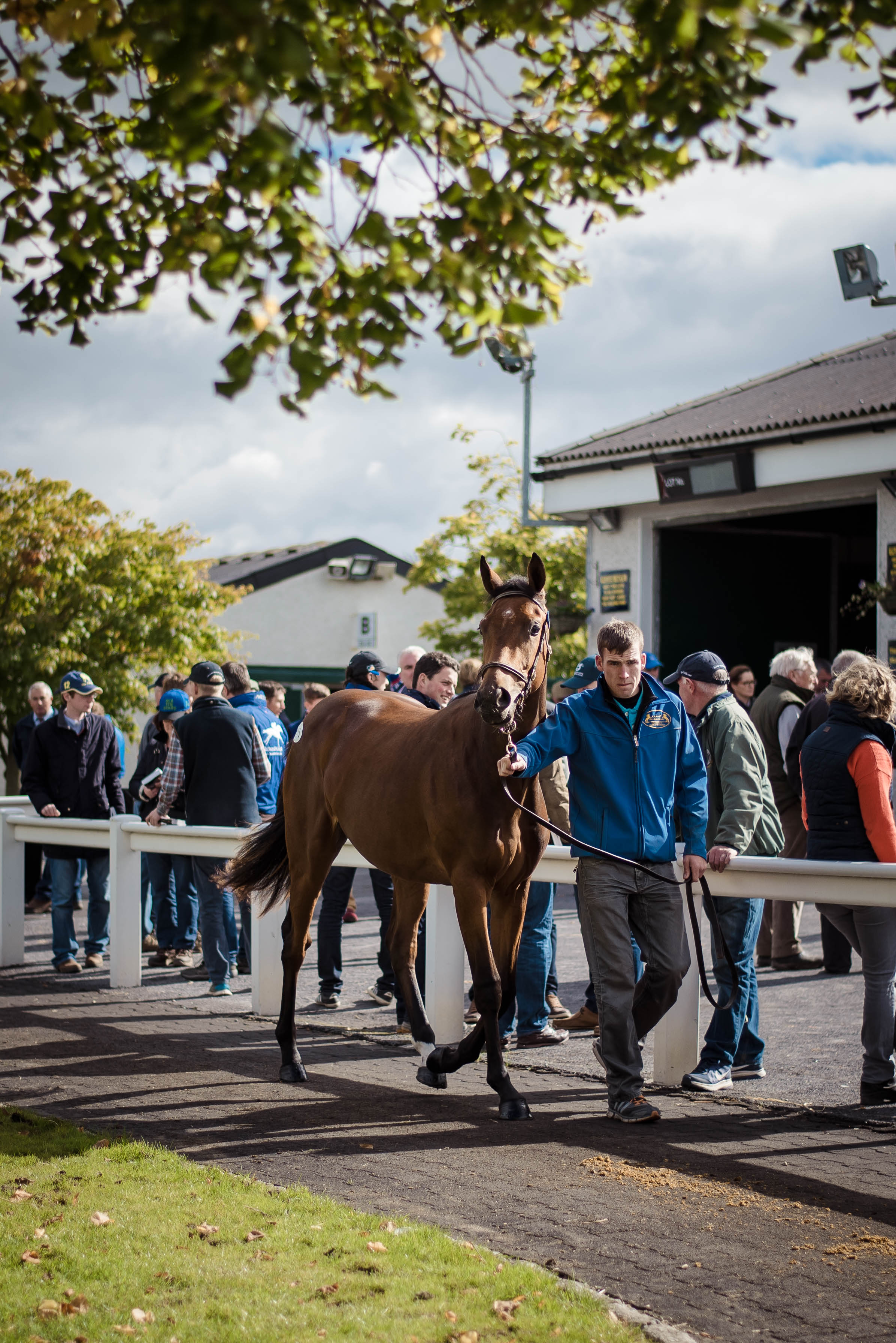Irish Thoroughbred Sales: Goffs & Fairyhouse post thumbnail image