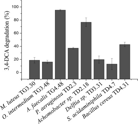 Diuron degradation by bacteria from soil of sugarcane