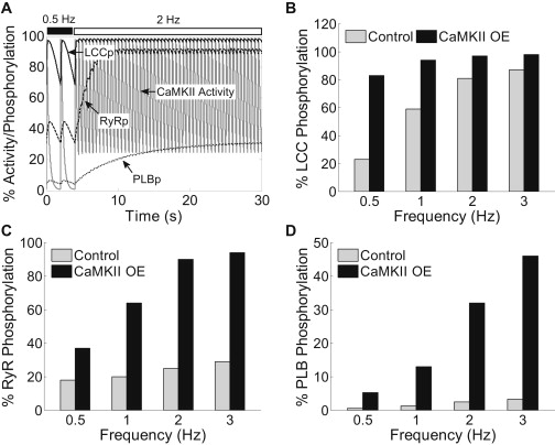 Synergy between CaMKII Substrates and β-Adrenergic