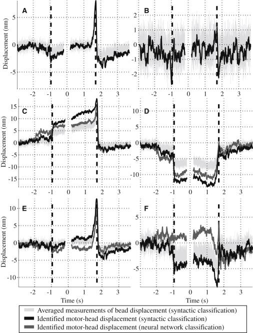 Bidirectional Power Stroke by Ncd Kinesin: Biophysical Journal