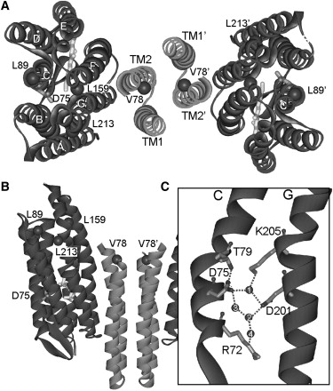 The Signal Transfer from the Receptor NpSRII to the