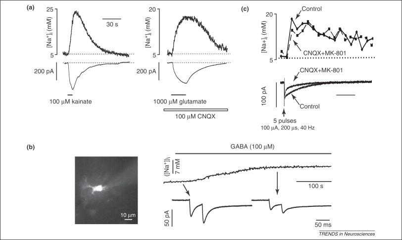 Sodium dynamics: another key to astroglial excitability