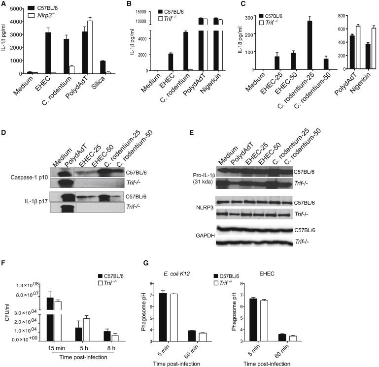 TRIF Licenses Caspase-11-Dependent NLRP3 Inflammasome