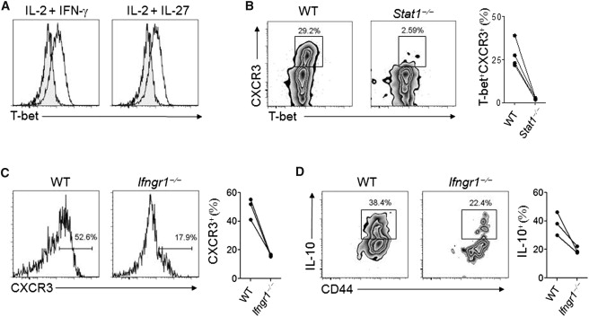 T-bet+ Treg Cells Undergo Abortive Th1 Cell