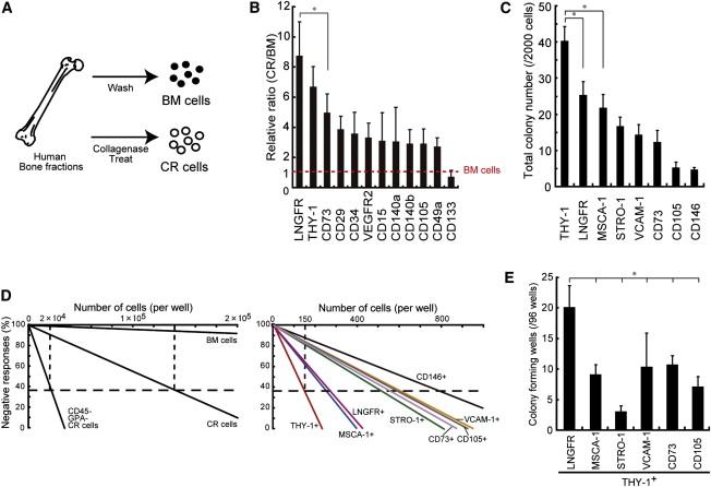 LNGFR+THY-1+VCAM-1hi+ Cells Reveal Functionally Distinct