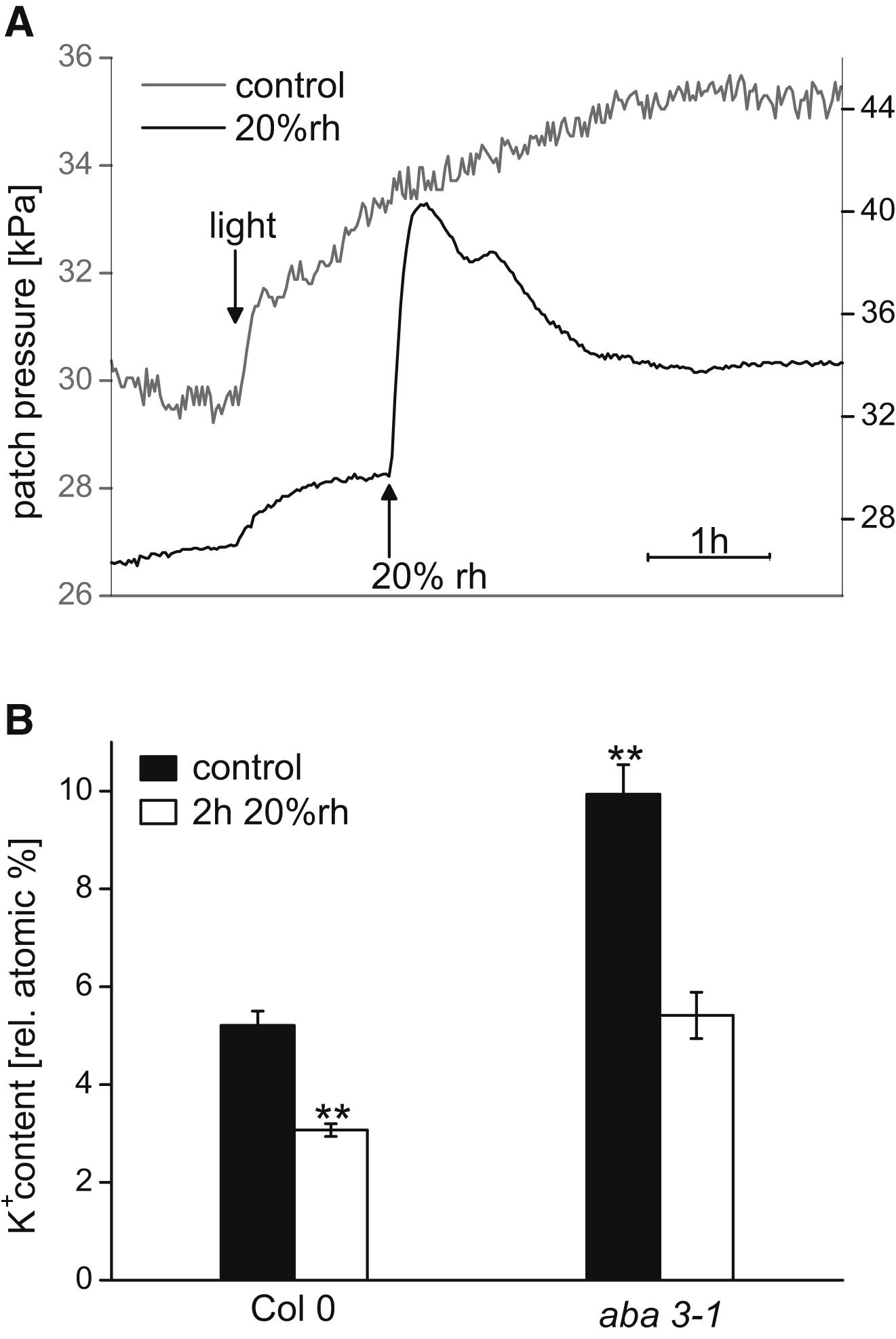 The Stomatal Response to Reduced Relative Humidity