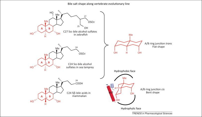 Marine sponge steroids as nuclear receptor ligands: Trends