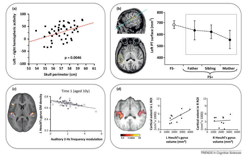 Revisiting human hemispheric specialization with