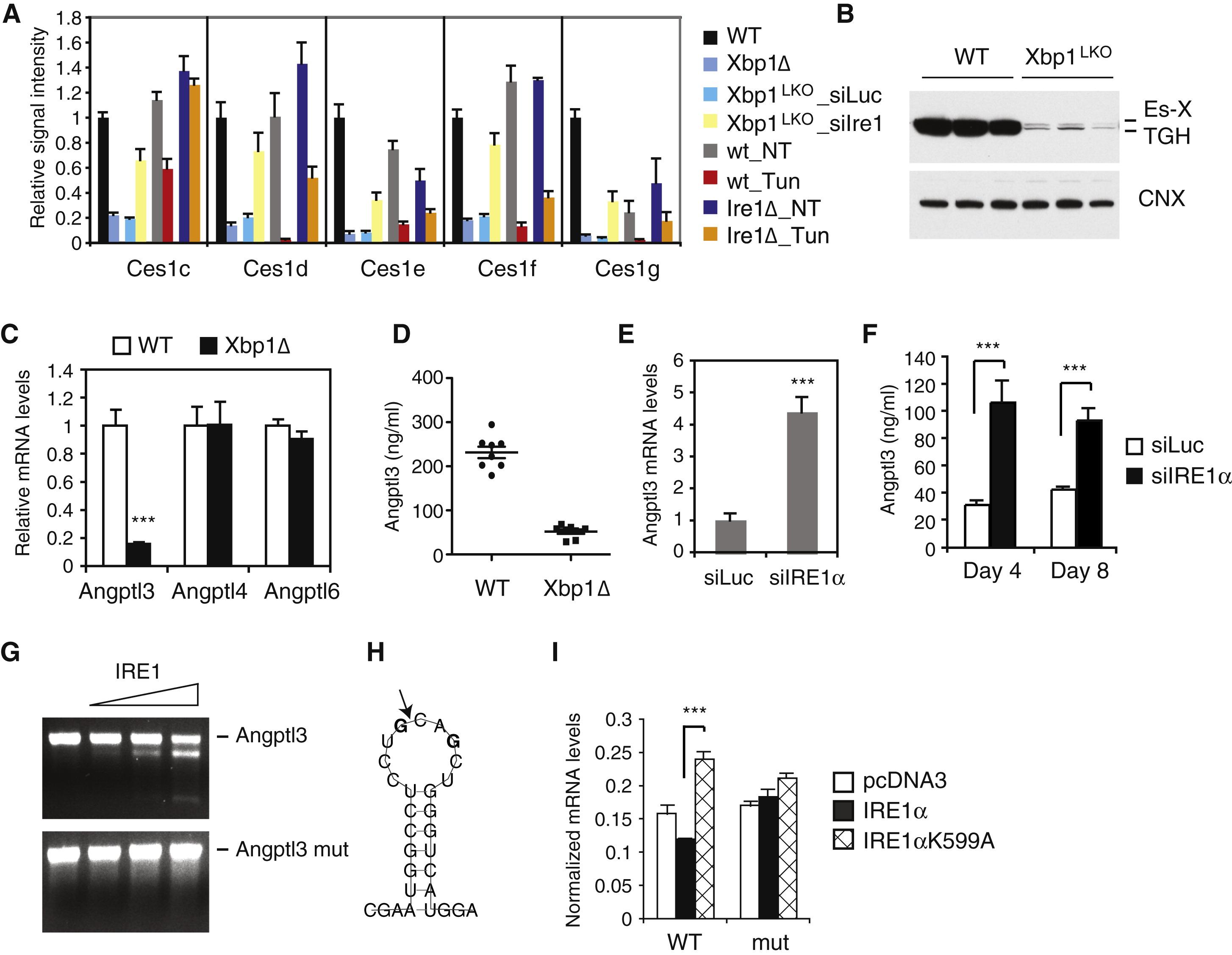 Silencing of Lipid Metabolism Genes through IRE1α-Mediated