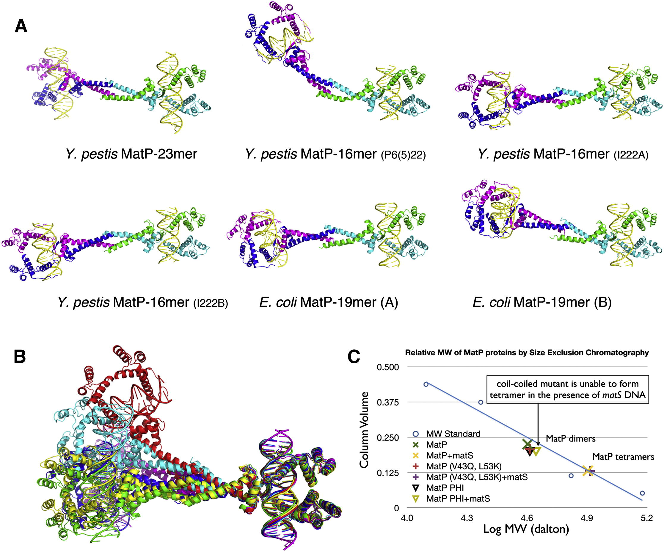 Molecular Basis For A Protein Mediated Dna Bridging Mechanism That Functions In Condensation Of