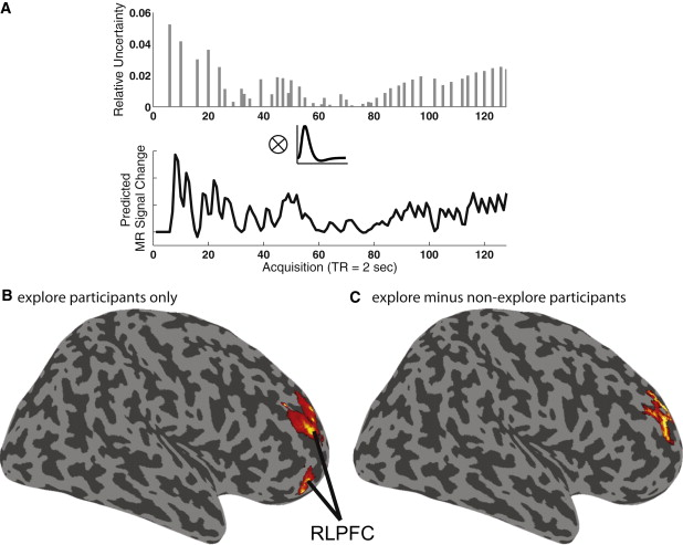 Rostrolateral Prefrontal Cortex and Individual Differences