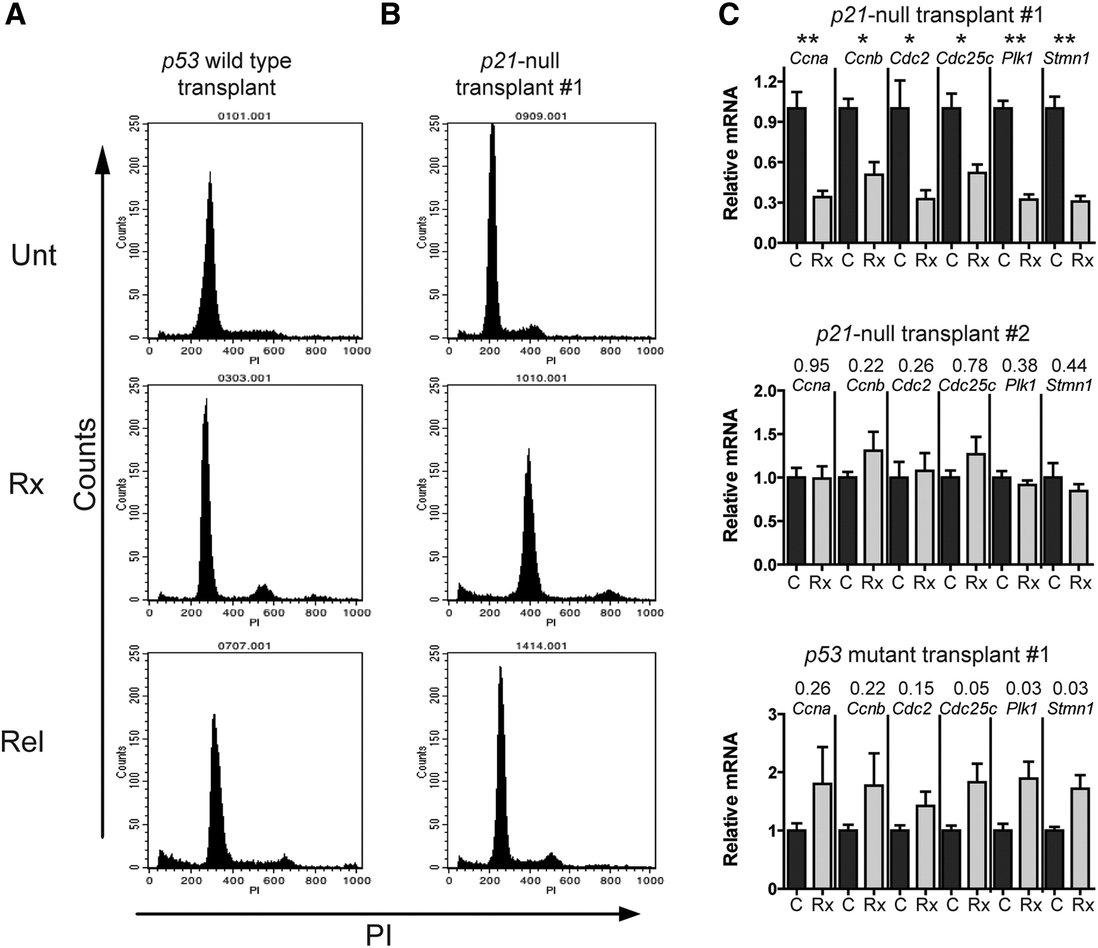 p53-Mediated Senescence Impairs the Apoptotic Response to