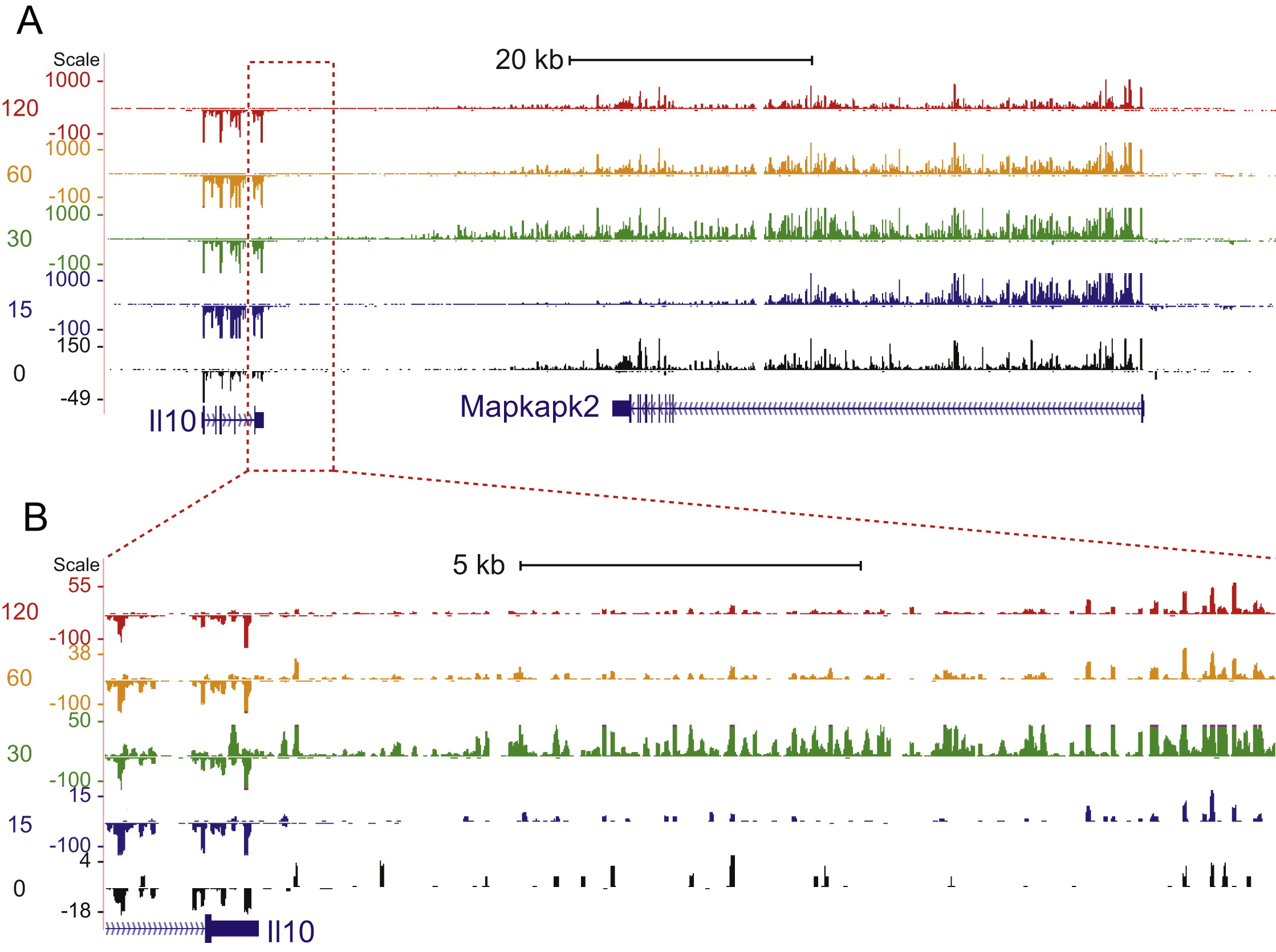 Transcript Dynamics Of Proinflammatory Genes Revealed By Sequenceysis Of Subcellular Rna