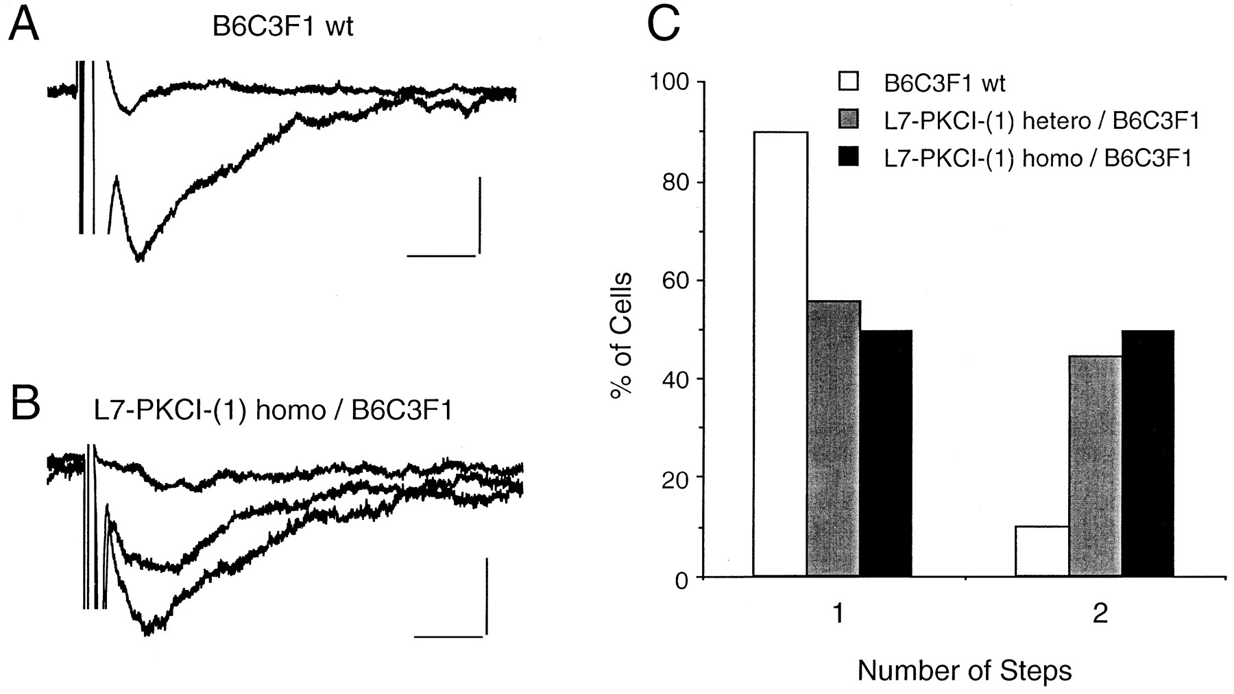 Expression of a Protein Kinase C Inhibitor in Purkinje