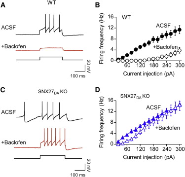 Sorting Nexin 27 Regulation of G Protein-Gated Inwardly