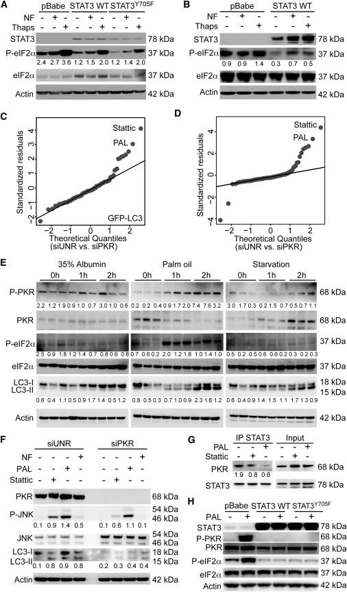 Cytoplasmic STAT3 Represses Autophagy by Inhibiting PKR
