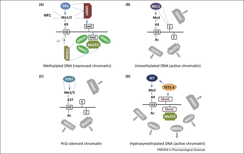 Epigenetic mechanisms of importance for drug treatment