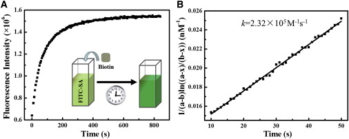Recognition Kinetics of Biomolecules at the Surface of