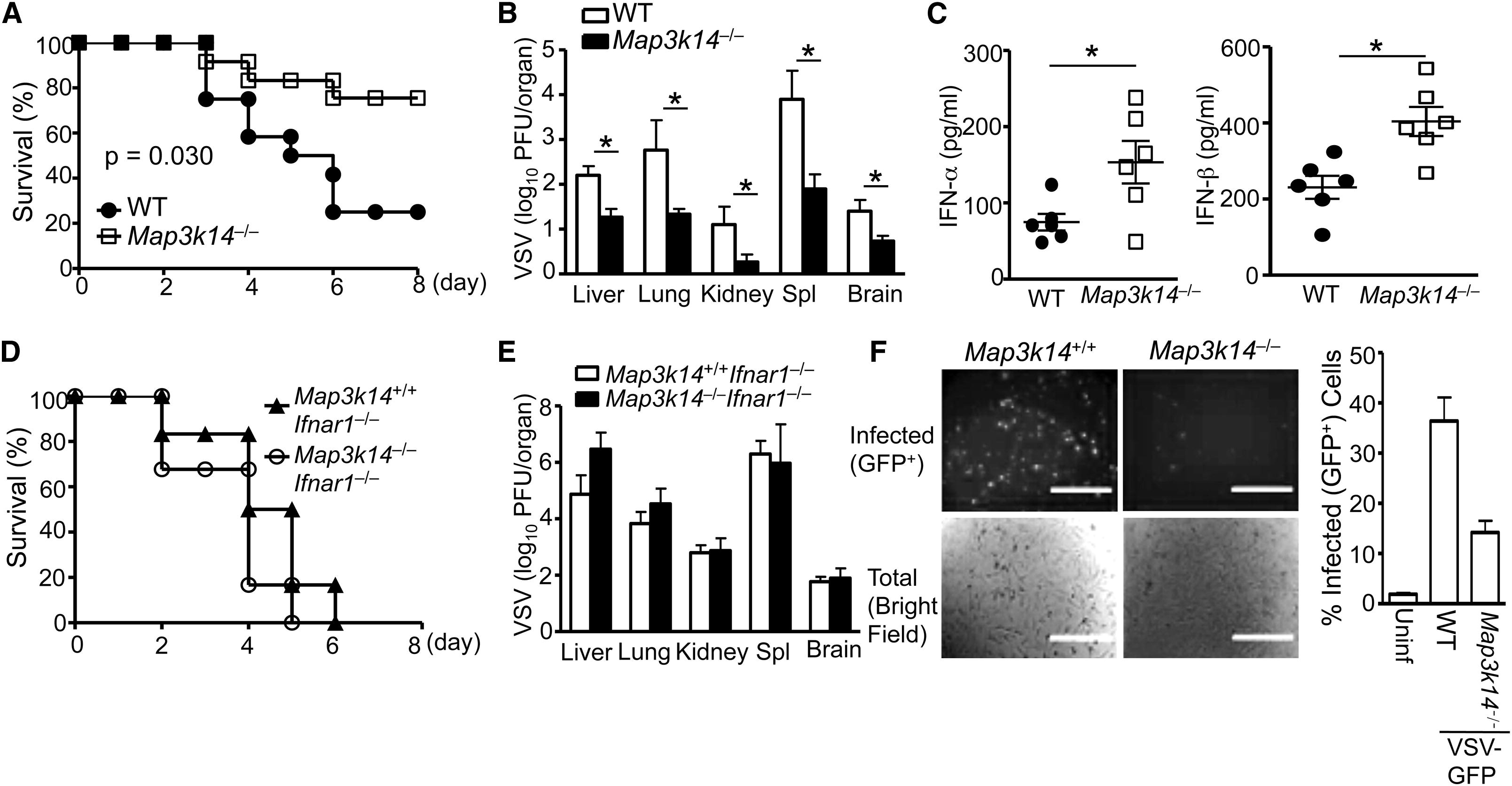 Noncanonical Nf B Pathway Controls The Production Of Type I Interferons In Antiviral Innate