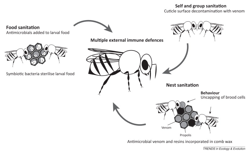 Unifying external and internal immune defences: Trends in