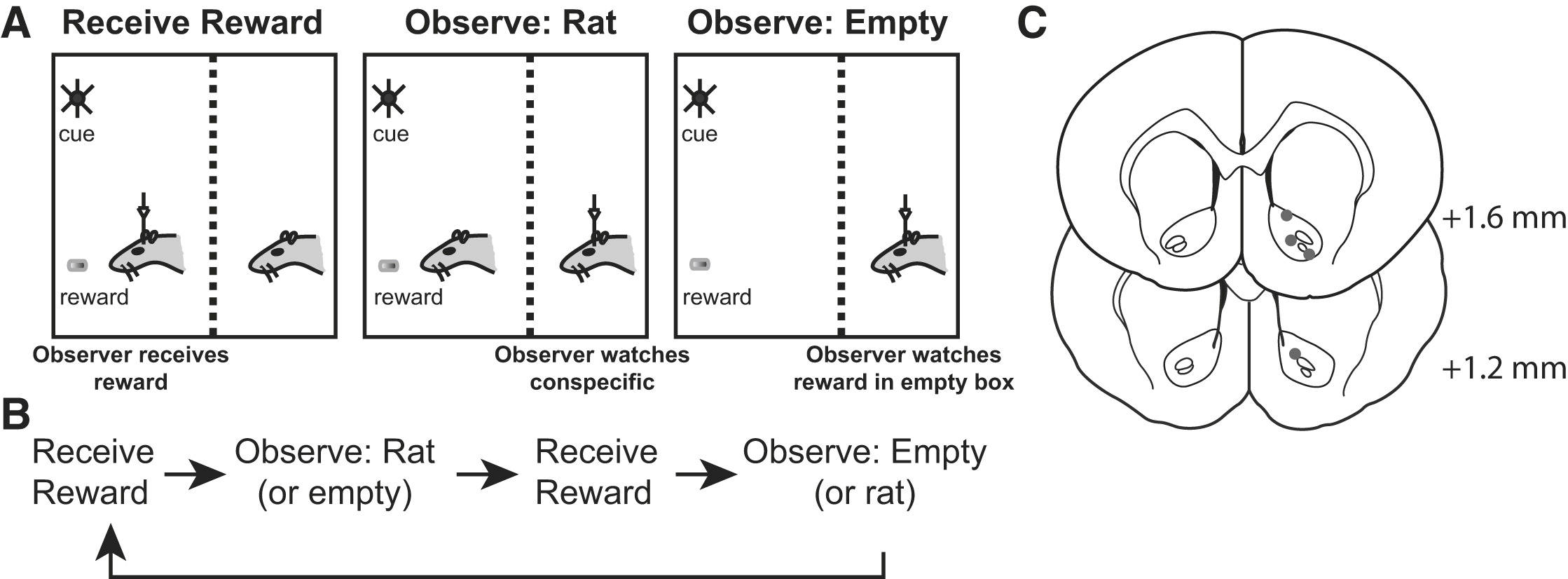 Observation of Reward Delivery to a Conspecific Modulates