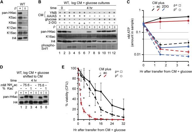 Rewiring AMPK and Mitochondrial Retrograde Signaling for