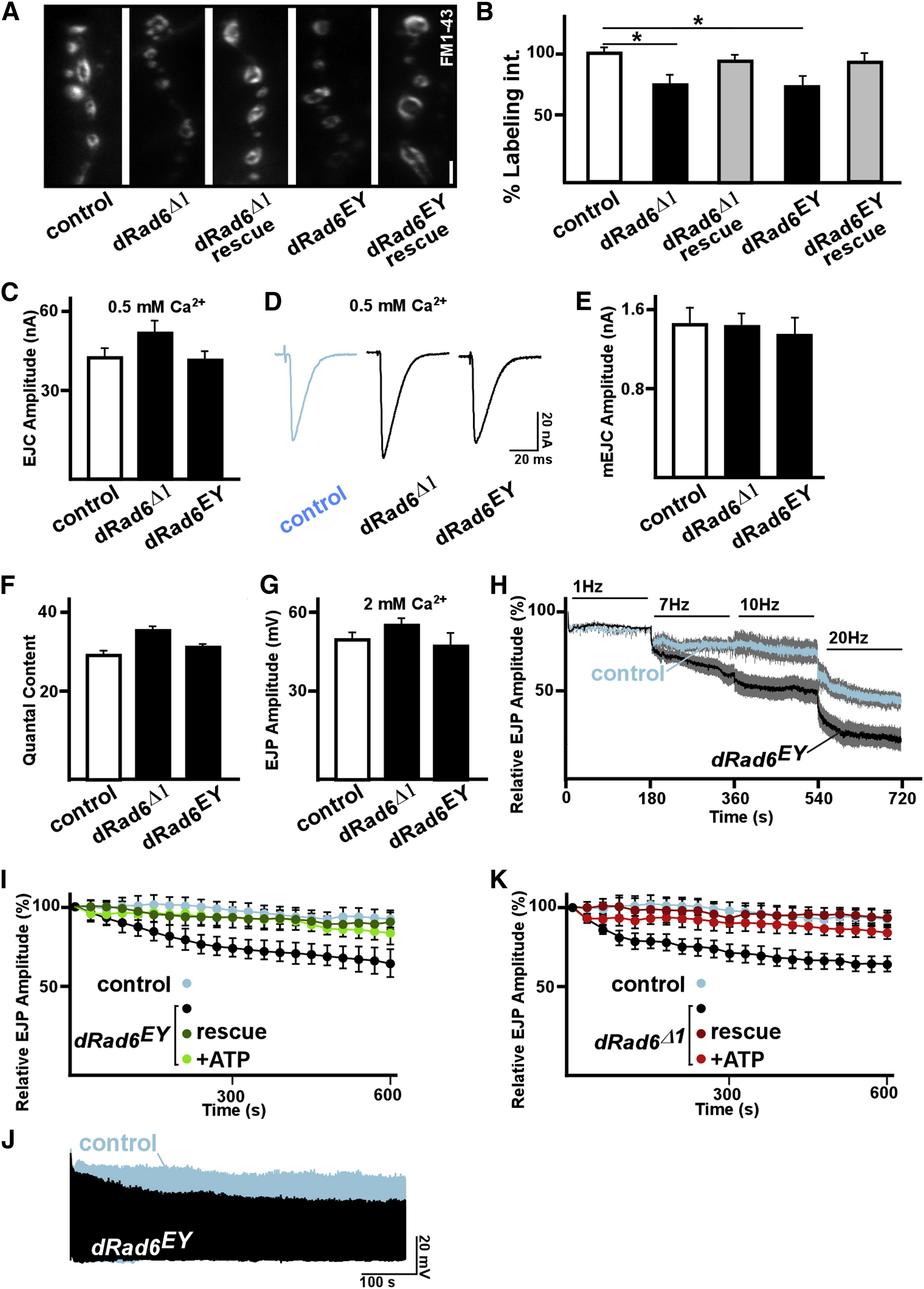 Mutations in the Intellectual Disability Gene Ube2a Cause