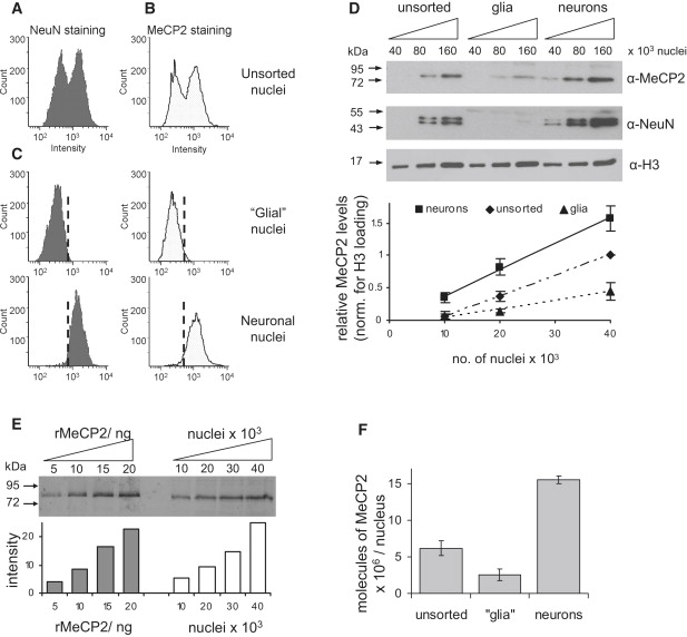 Neuronal MeCP2 Is Expressed at Near Histone-Octamer Levels