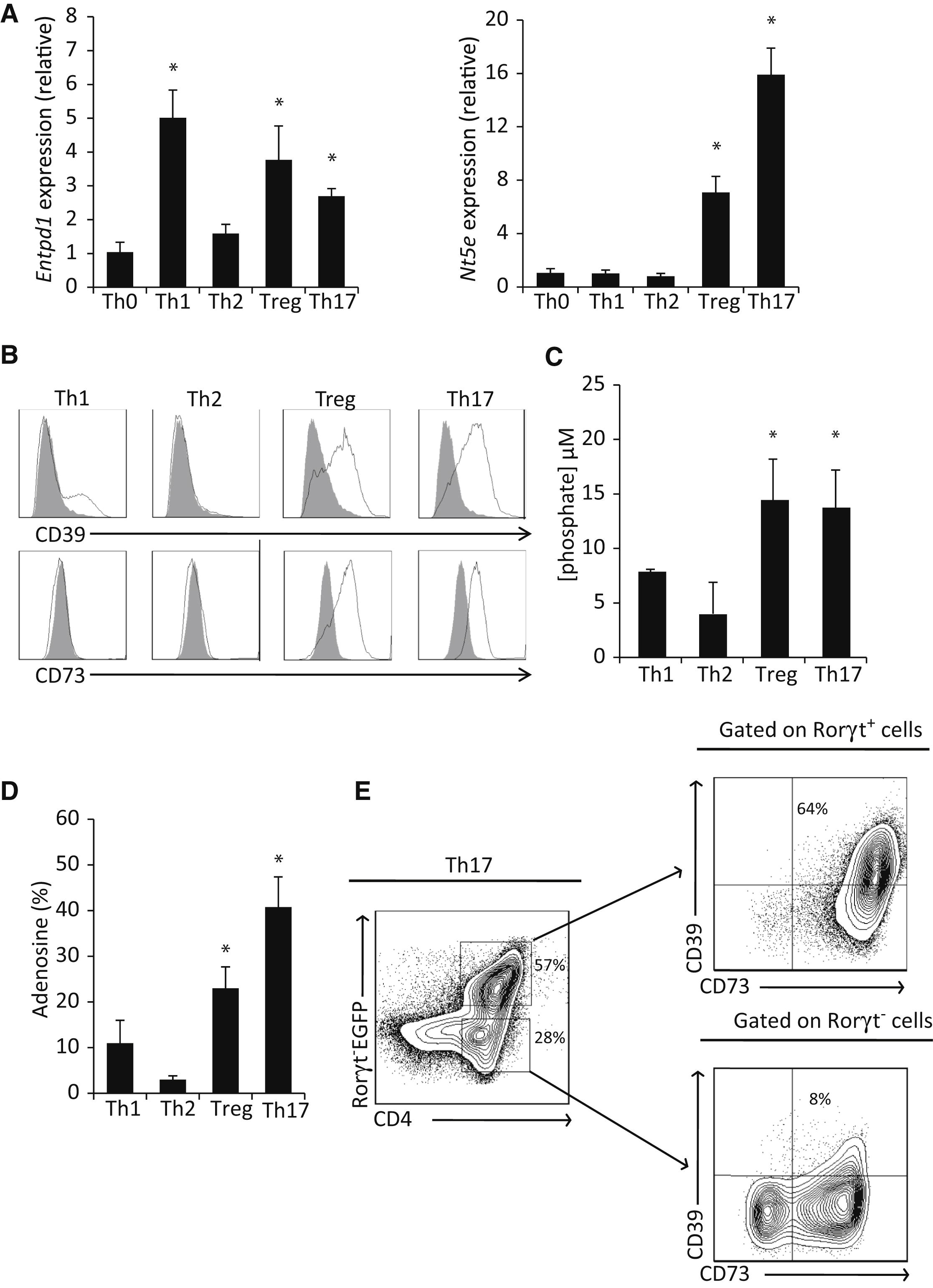Stat3 and Gfi-1 Transcription Factors Control Th17 Cell