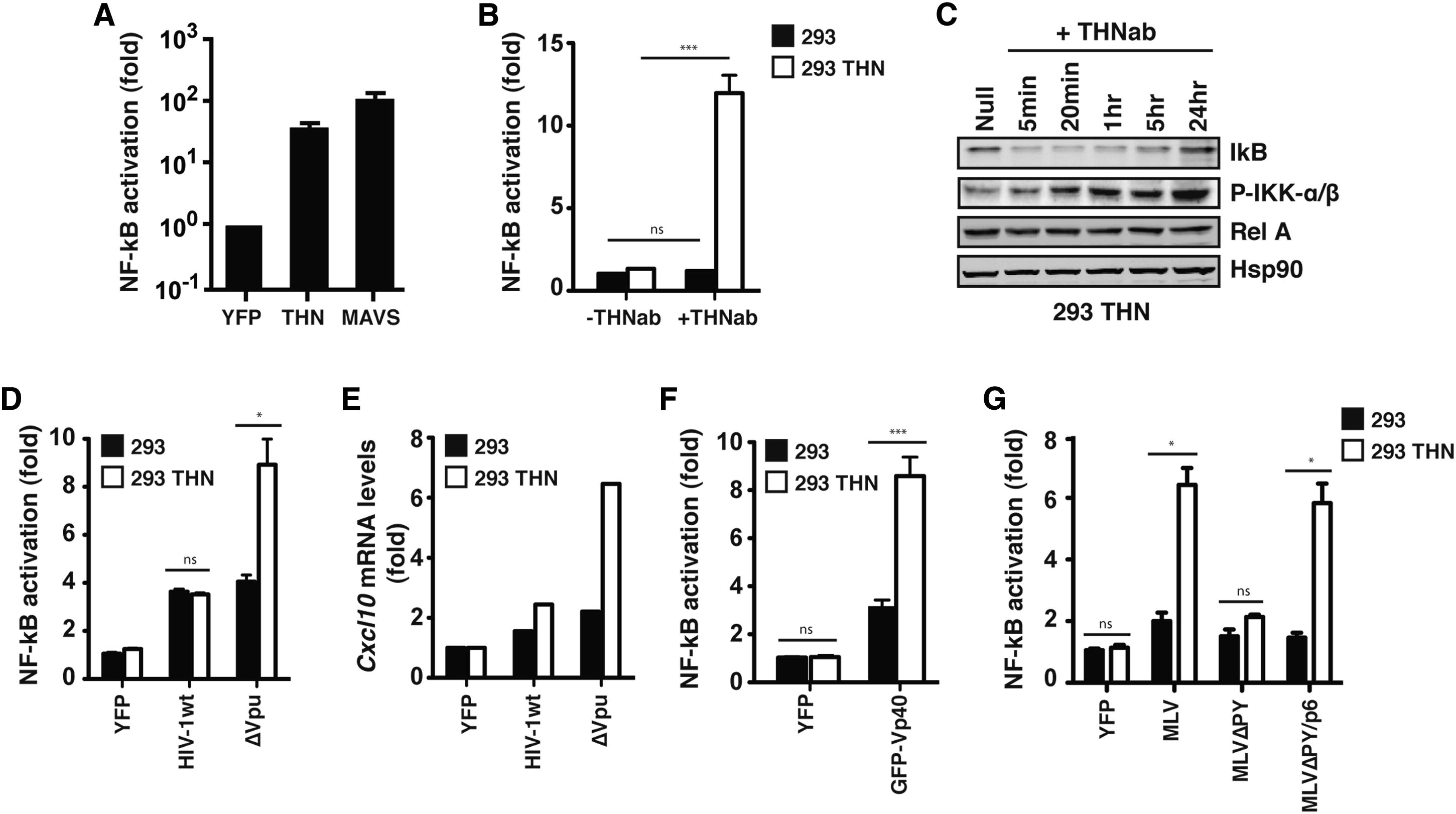 Innate Sensing of HIV-1 Assembly by Tetherin Induces NFκB