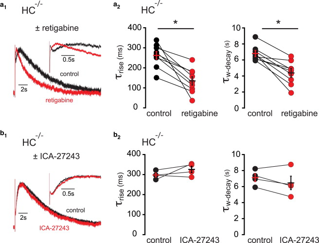 Hippocalcin and KCNQ Channels Contribute to the Kinetics