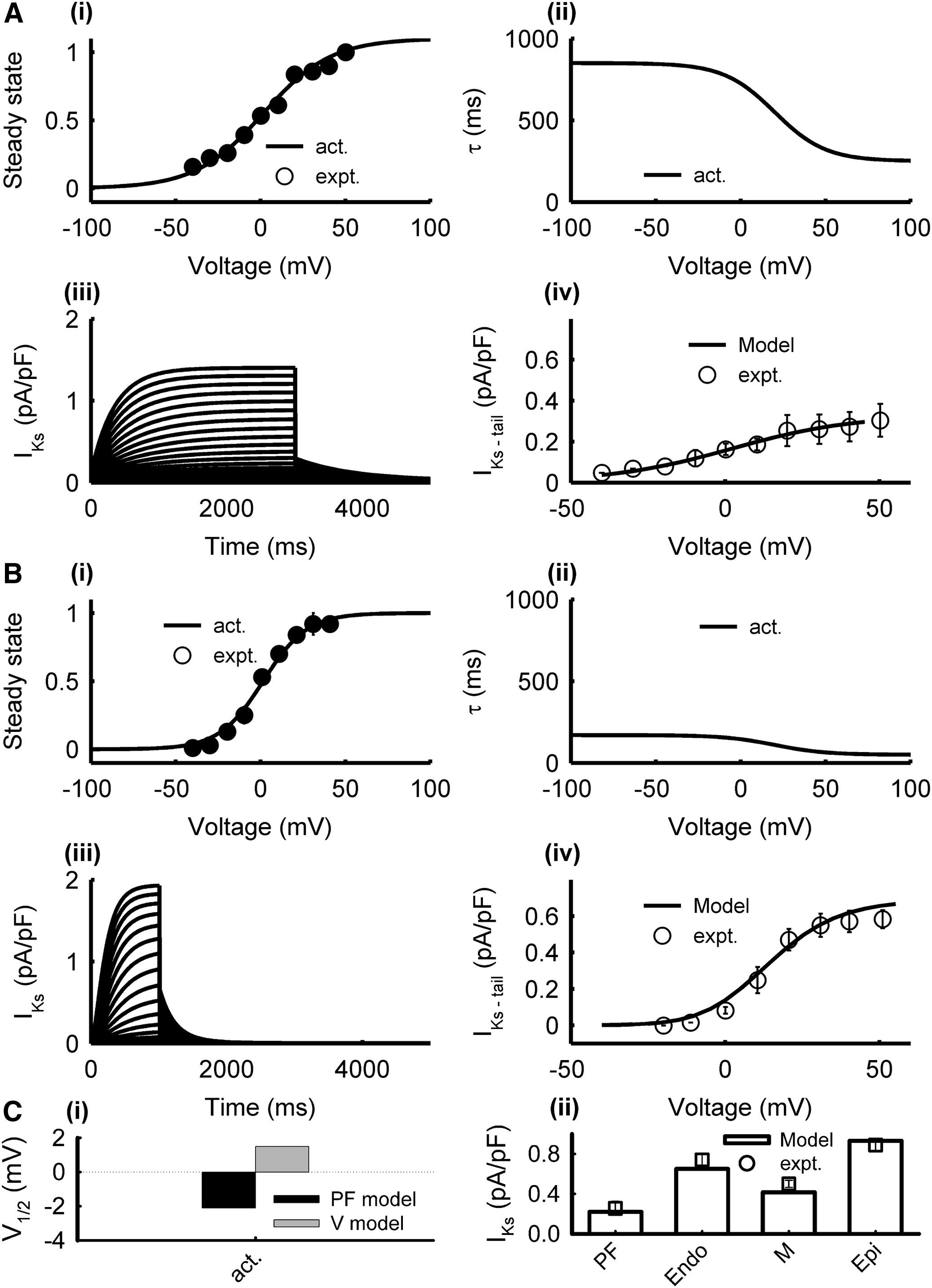 Ionic Mechanisms for Electrical Heterogeneity between