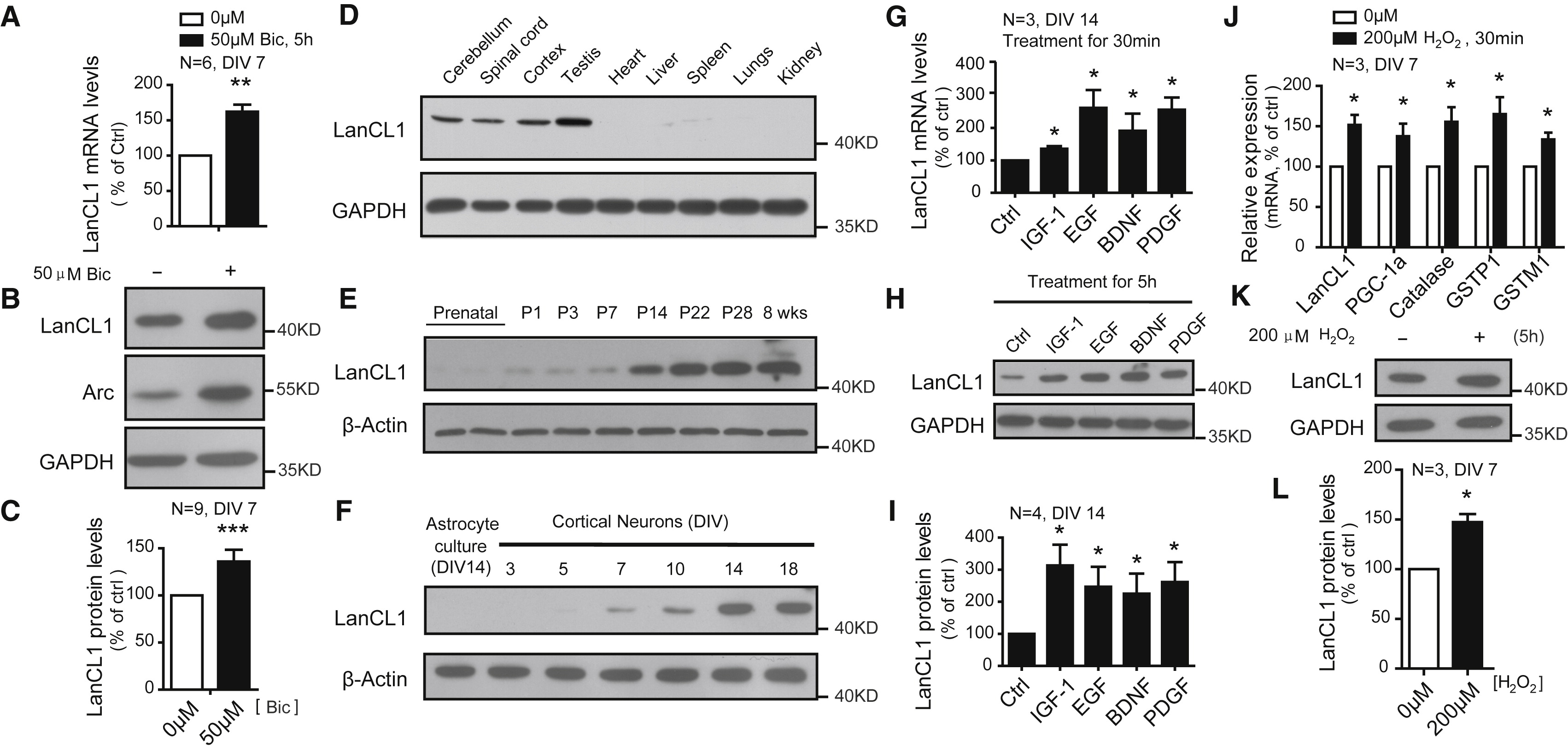 Developmental and Activity-Dependent Expression of LanCL1