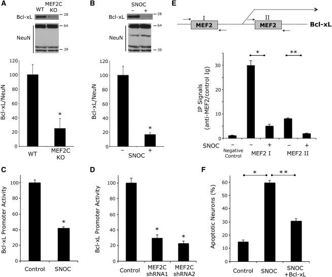 S-Nitrosylation-Mediated Redox Transcriptional Switch