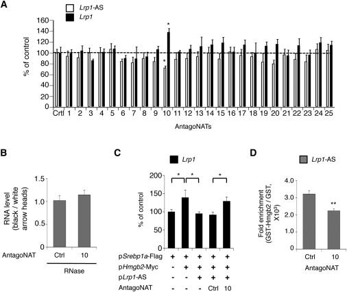 Antisense RNA Controls LRP1 Sense Transcript Expression
