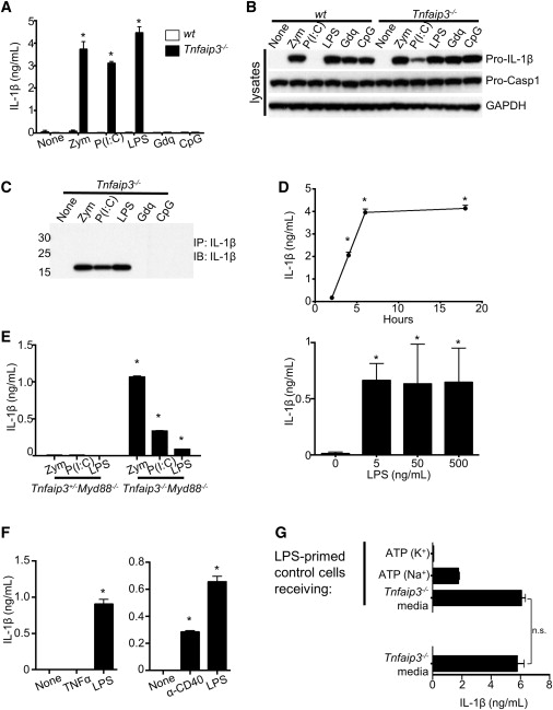 A20 Restricts Ubiquitination of Pro-Interleukin-1β Protein